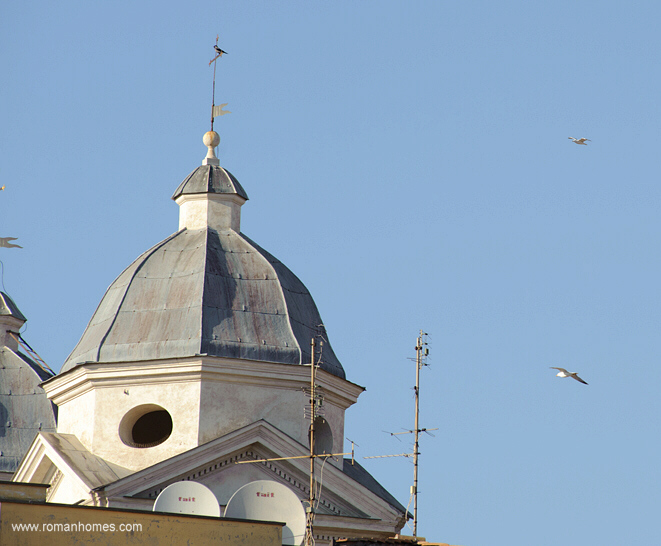 The Seagulls Of The Spanish Steps Rome Seagulls Panoramic